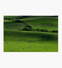 Meadow Photographic Print