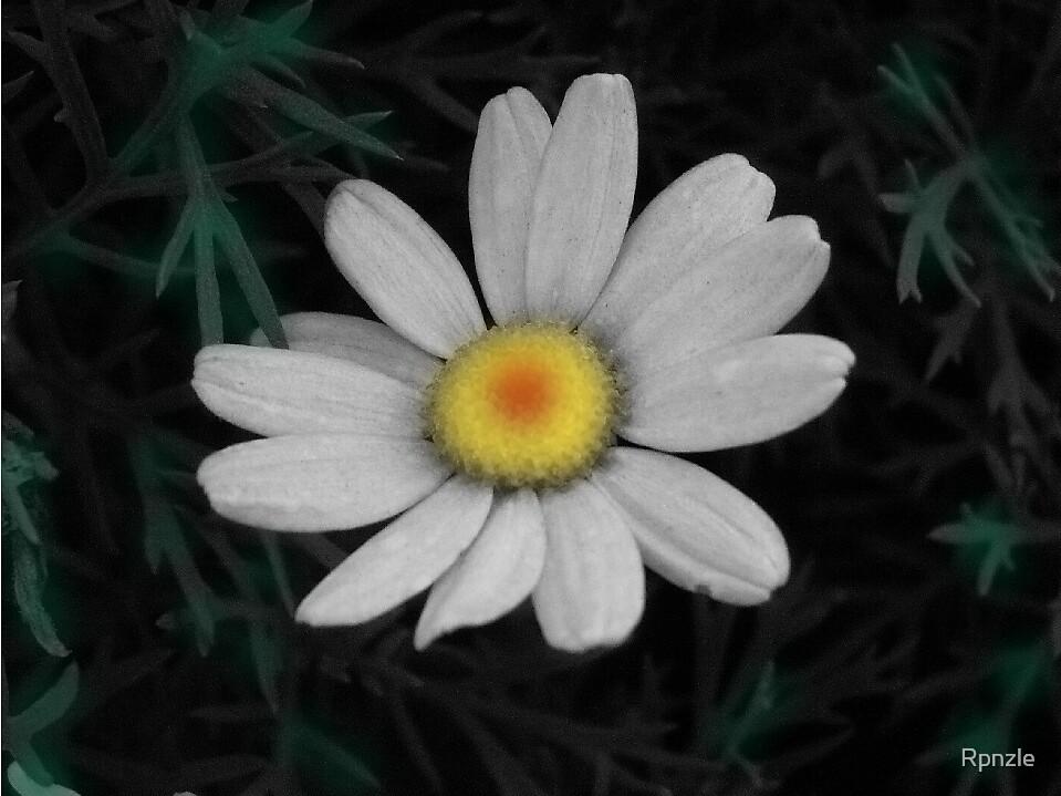 Dear Daisy.... by Rpnzle