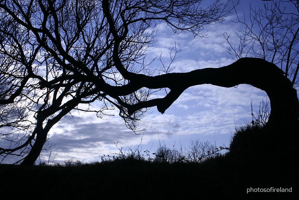 Old windswept tree against evening sky by photosofireland