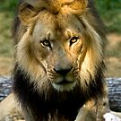 The King by Jerry  Mumma