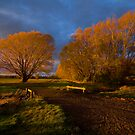 Autumn Trees by Peter Daalder