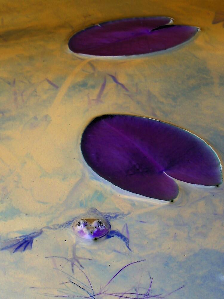under the lily pad by Gayathri  Ramachandran