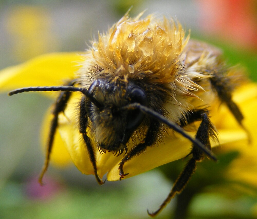wet bee by knowledge123