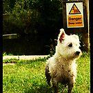 Lomo dog pose by Niall