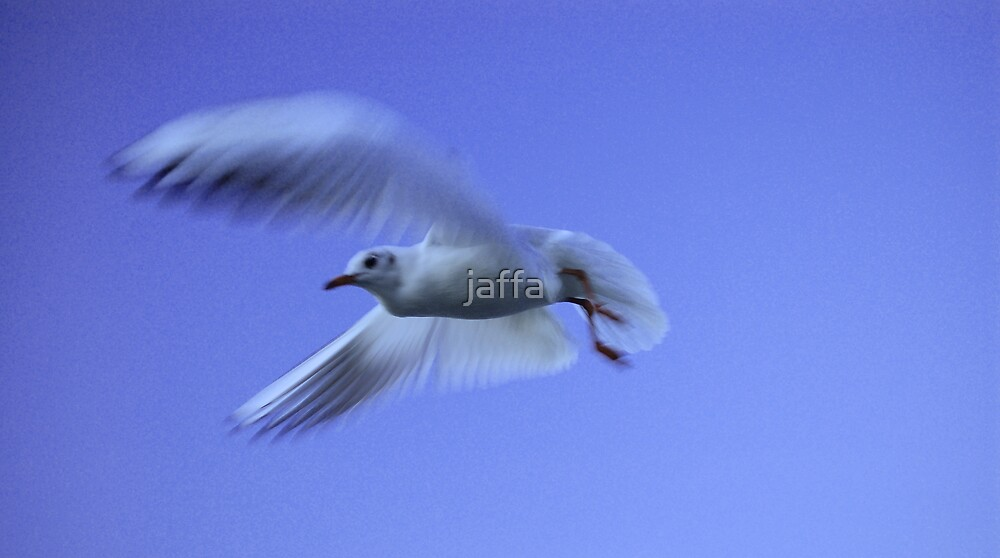 gull of peace!!! by jaffa