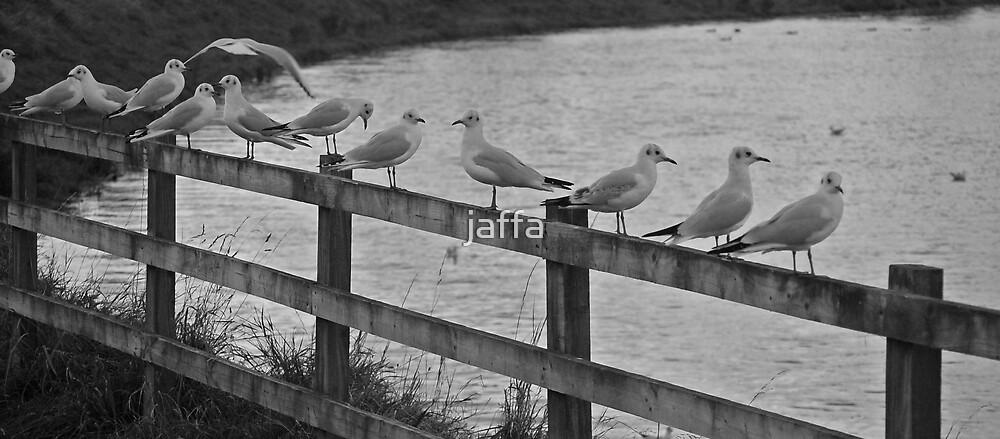 even british gulls queue?? by jaffa
