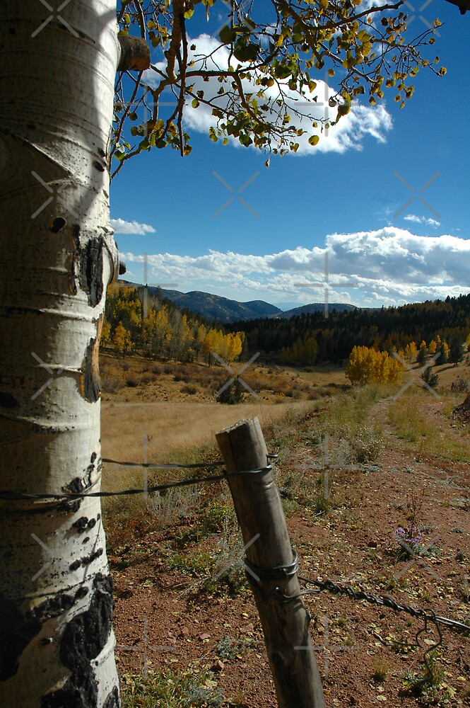 Fall For Colorado by Holly Werner