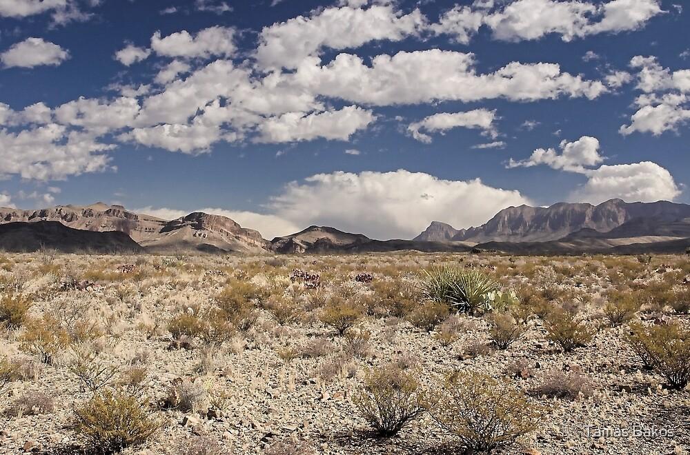 Quot Chihuahuan Desert Texas Quot By Tamas Bakos Redbubble