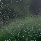 Web of Jewels by Alan Wood