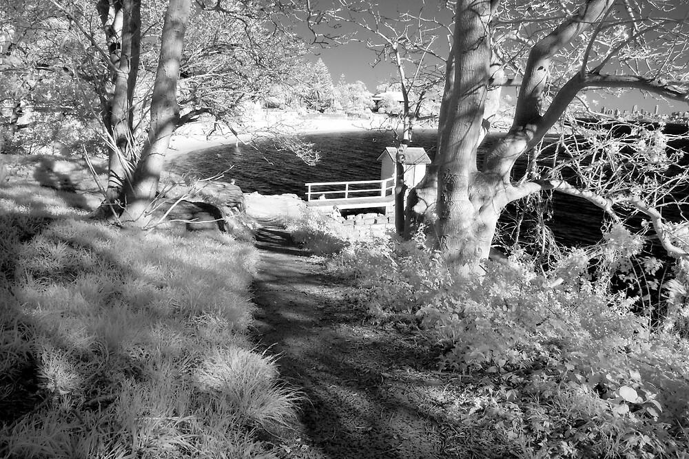 South Head walk in IR by Trent Wallis