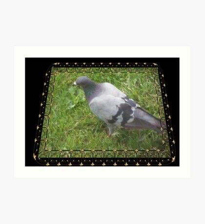 Pigeon on the Green Art Print