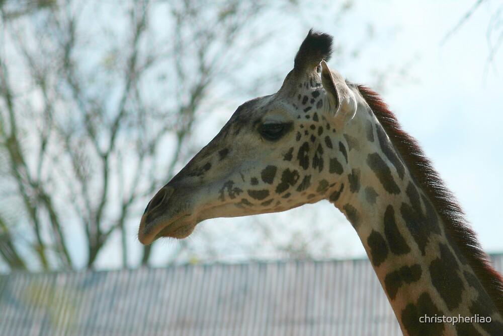 Giraffe head above house by christopherliao
