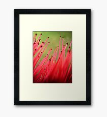 nature brush Framed Print