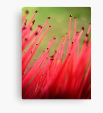 nature brush Canvas Print