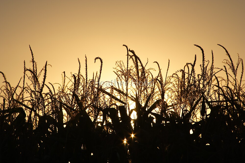 Corn Harvest at sunset silhouette  by Heather Hood