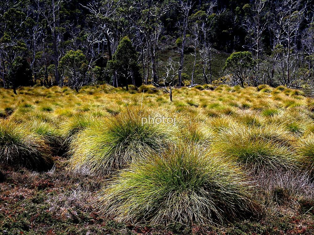 photoj-Cradle Mt National Park by photoj