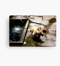 The Bears of Bern Canvas Print