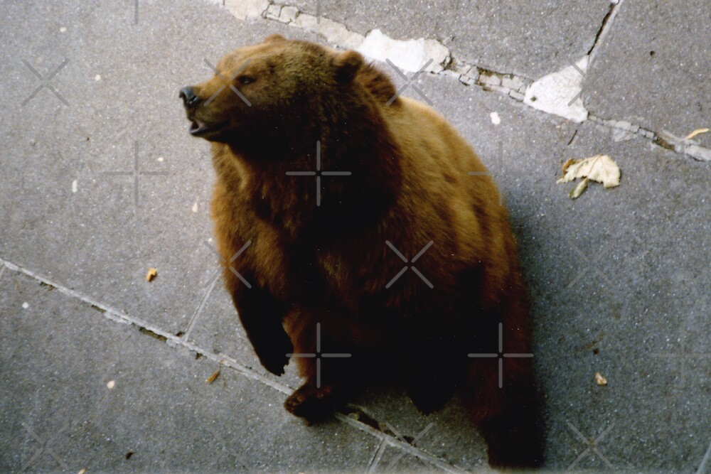 The Bears of Bern by georgiegirl