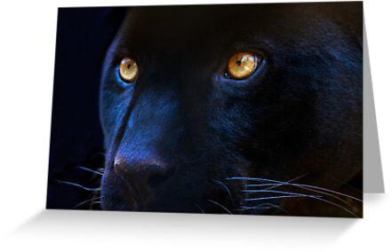 black panther by Enjoylife