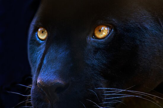 black panther by Enjoylife