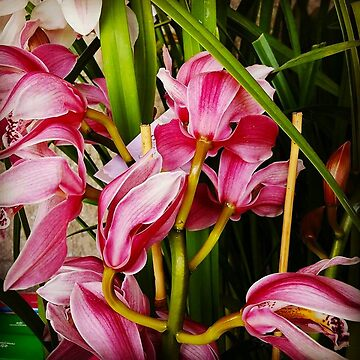 Pink Orchids by penneyknightly