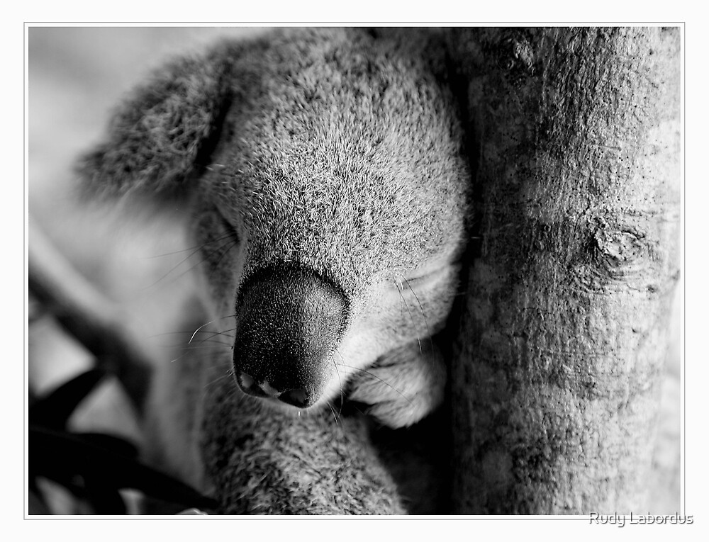 Cuddly by Rudy Labordus