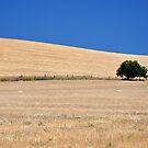Classic Farmscape by Dan Bronish