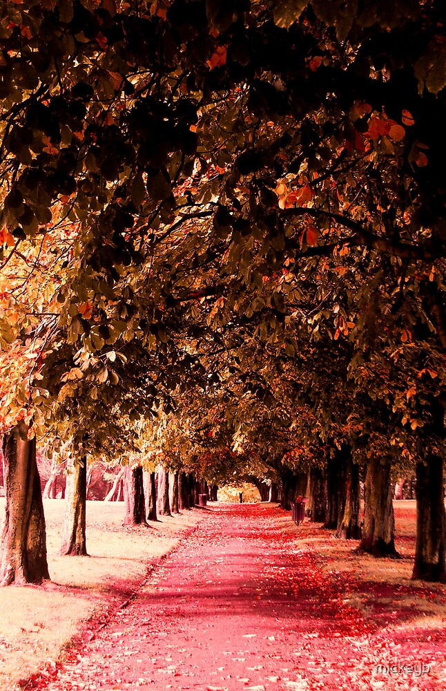 autumn way by mickeyb