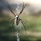 Along Came A Bigger Spider by Suni Pruett