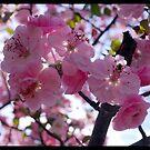 Spring Boquet by PhotoBAB