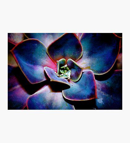 desert rose Photographic Print