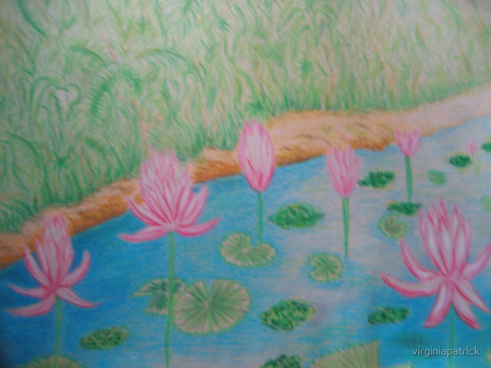Lily in the Stream by virginiapatrick