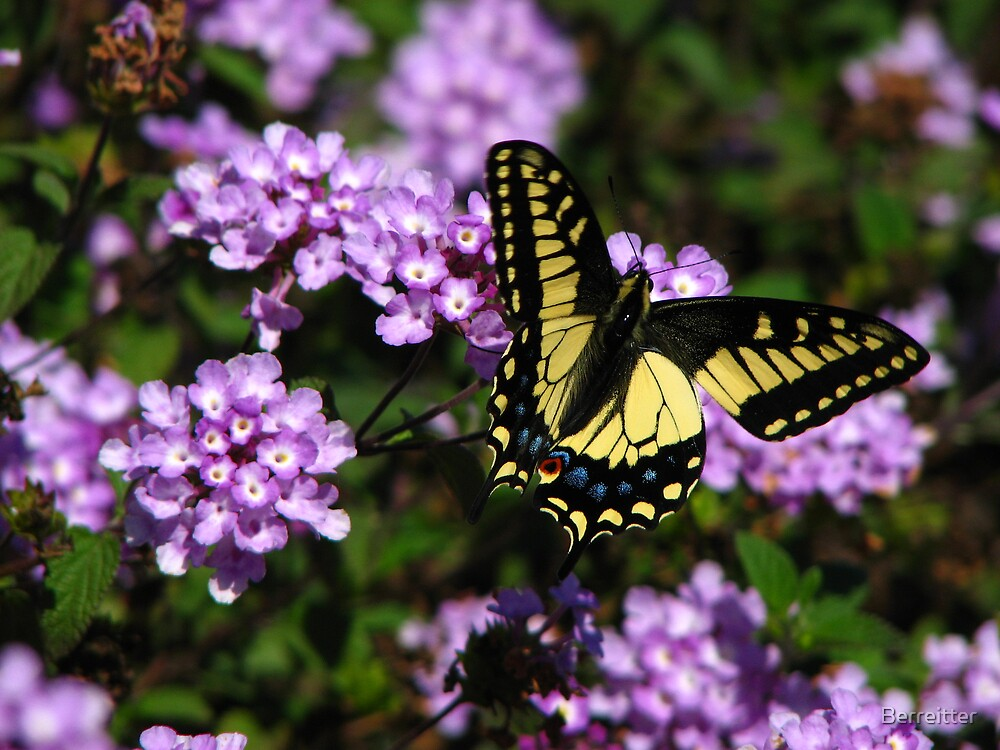 Yellow Swallowtail 3 by Berreitter