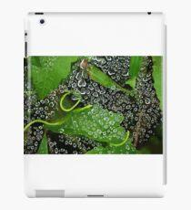Dew drops! iPad Case/Skin