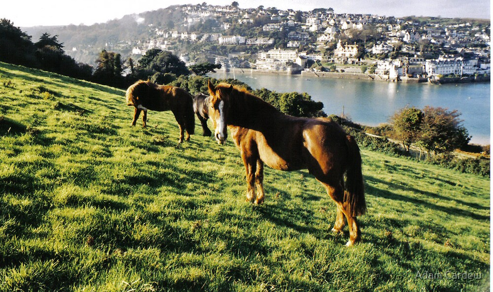 Horses overlooking Salcombe and Harbour by Adam Cardew