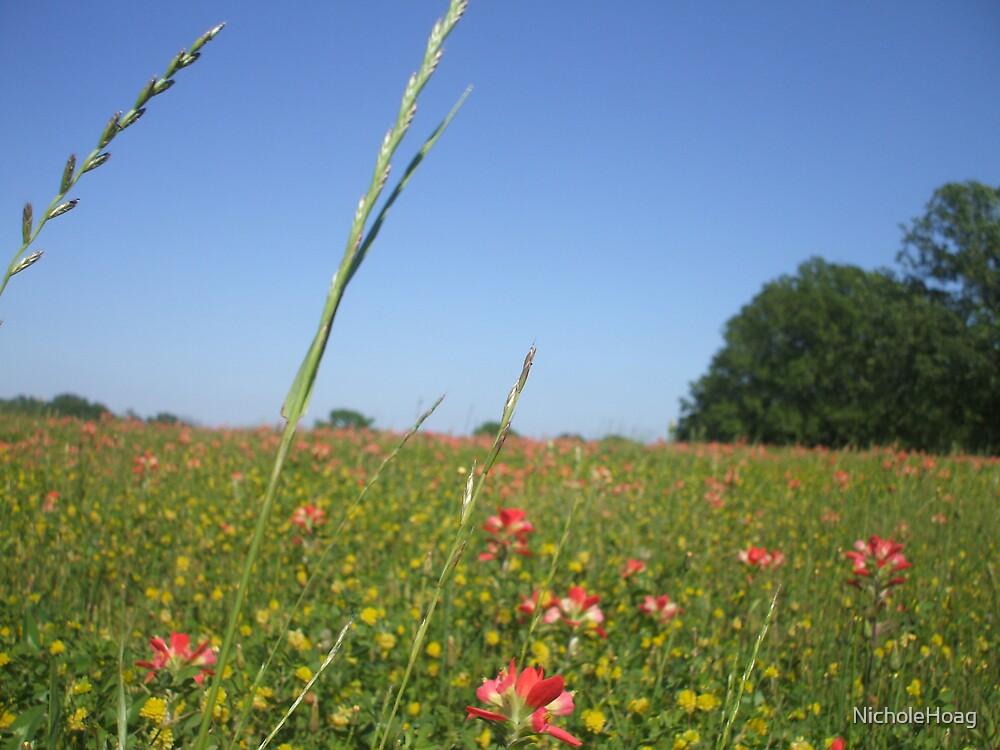 Beautiful Texas Field by NicholeHoag