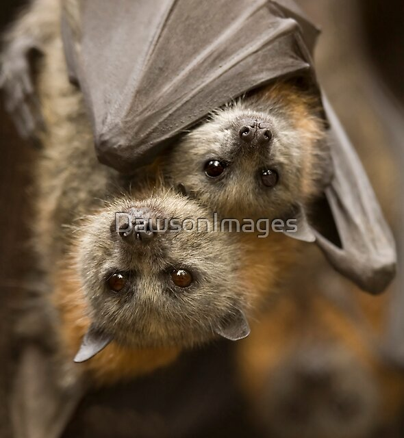 Hang In there by DawsonImages