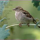 Bird song by snowbird