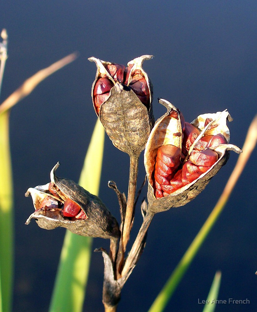 Pods on the Pond by Lee Anne French