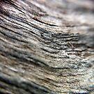Driftwood by Kitsmumma