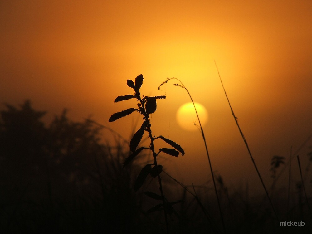 sun set over the Anaconda hunt by mickeyb