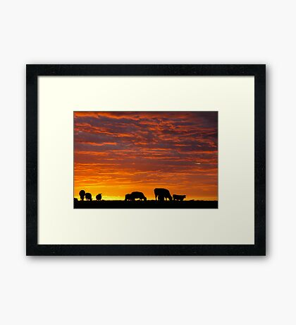 Glorious Grazing Framed Print