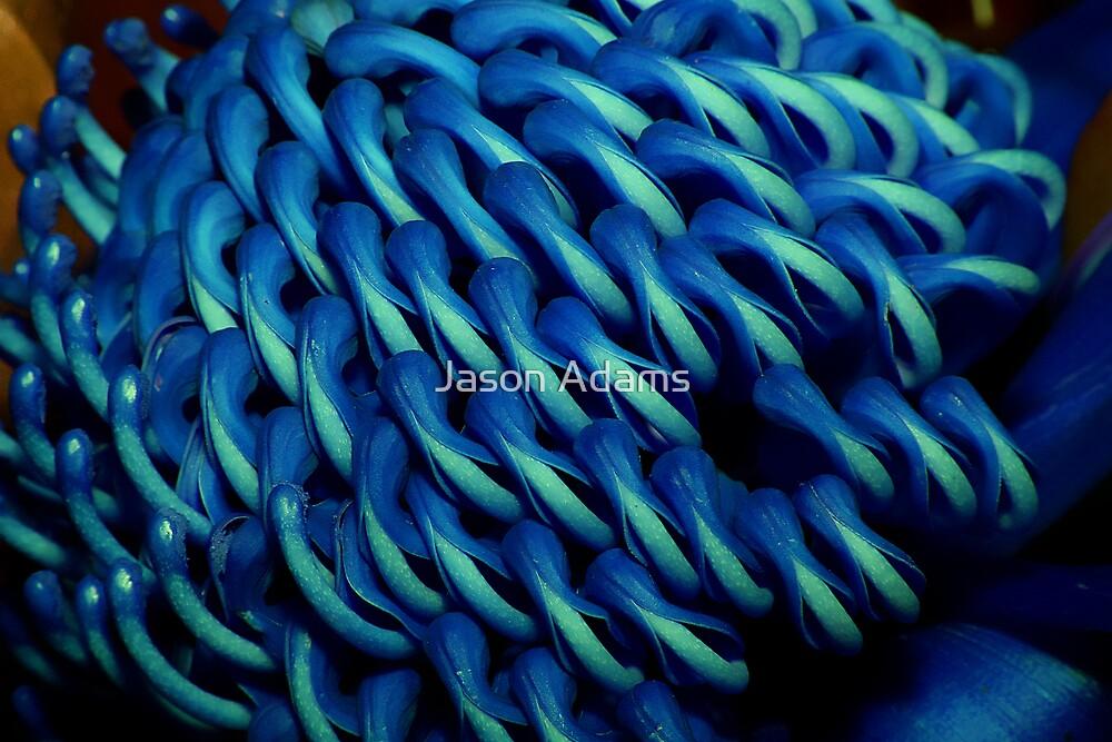 Blue Waratah by Jason Adams