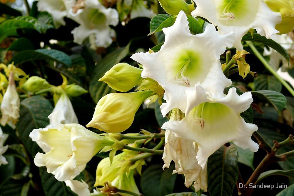 flowers by Dr. Sandeep Jain