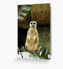 One meerkat coming up! Greeting Card