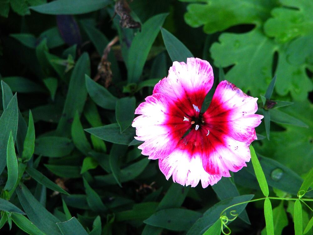 a pretty little flower by ashleymaiwoo