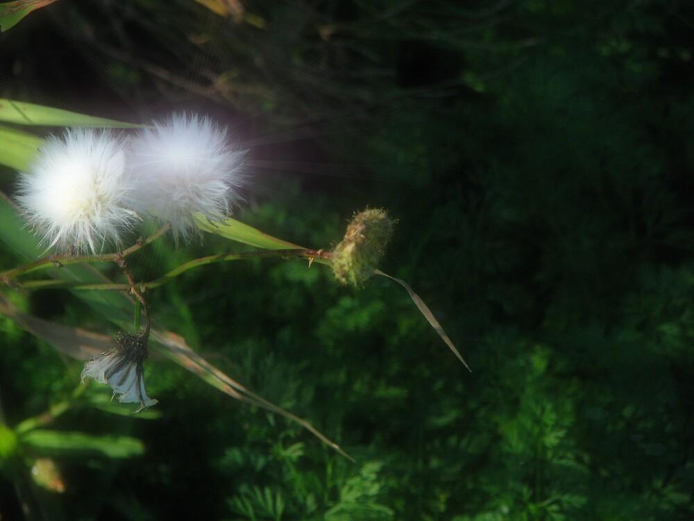 Soft  explosion by ashleymaiwoo