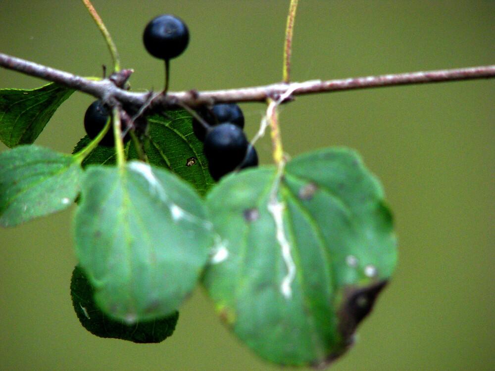 three leaves with black berries by ashleymaiwoo
