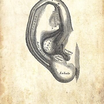 Anatomy of an Ear by jessecain