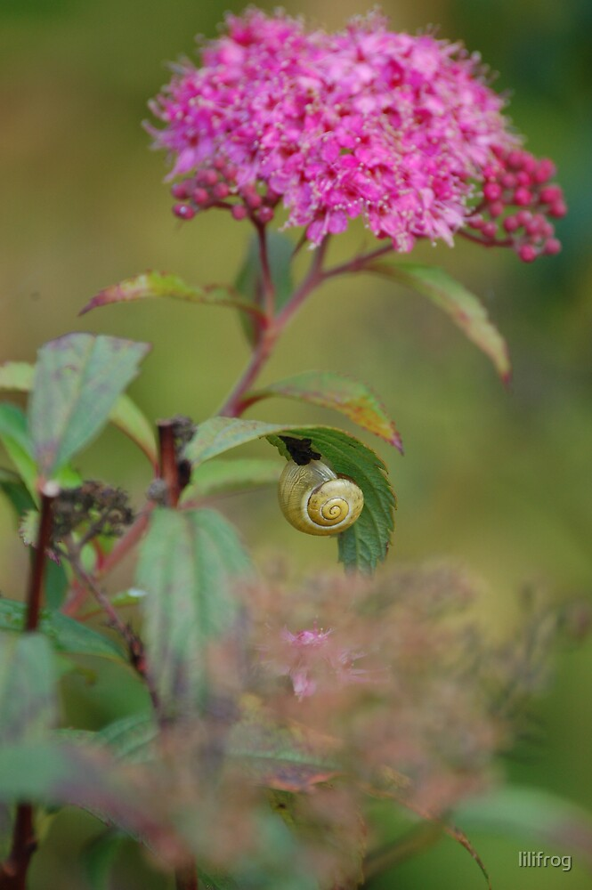 a snail on a branch by lilifrog